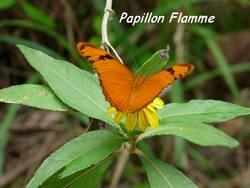 papillon, balade, dos d`ane, basse terre, guadeloupe, antilles