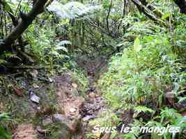 Clusia mangle, Mangles montagne, Armistice