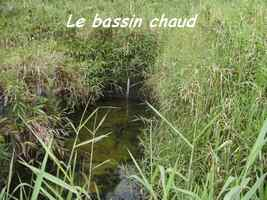 Bassin chaud, Papaye