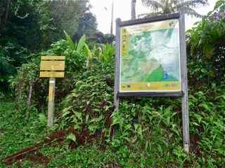 balade frézias foret humide ecosysteme tropical balisage