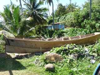 arbre barque foret hygrophile antilles