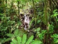cascade, mazdeleine, basse terre sud, guadeloupe