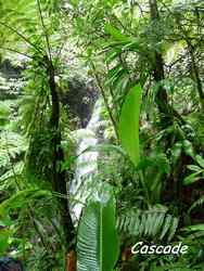 cascade, madeleine, basse terre sud, guadeloupe