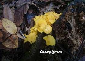 champignon, Trace 36 mois, ste rose, basse terre, guadeloupe