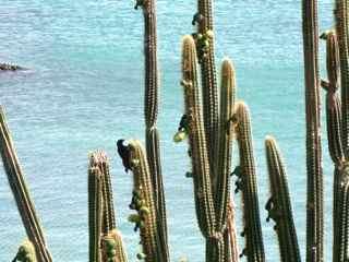 balade ilet cabrit les saintes cactus foret seche guadeloupe
