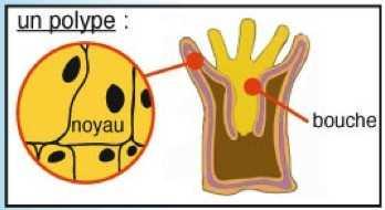 corail schéma1