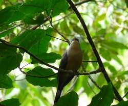 oiseau, balade, dos d`ane, basse terre, guadeloupe, antilles