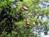 arbre, foret seche, ecosysteme tropical, guadeloupe, antilles