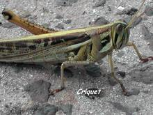 insecte foret seche, ecosysteme tropical, guadeloupe, antilles