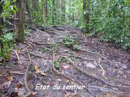 sentier, boueux, chutes moreau, goyave, basse terre nord, guadeloupe