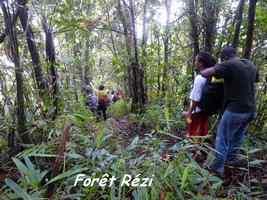 Forêt Rézi, Piotn de Bouillante