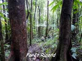 Forêt Ricard, Piton de Bouillante