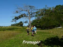 fromager, TGT, grande terre , guadeloupe