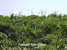 foret seche, ecosysteme tropical, guadeloupe antilles