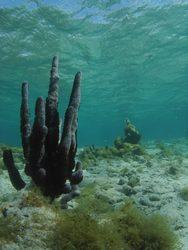 fond marin, benthos, récif corallien, guadeloupe, antilles