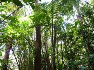 Frézias fougère foret humide écosystème tropical