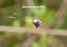 balade, désirade, araignée, iles de guadeloupe, antilles