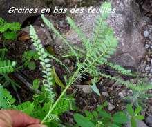 balade, plante jardin, terre de bas, iles guadeloupe, antilles
