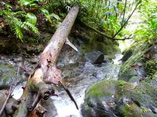 balade grosse corde cascade haut rivière basse terre guadeloupe