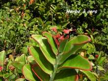 arbuste foret seche, ecosysteme tropical, guadeloupe, antilles