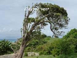 balade st felix, arbre, grande terre, guadeloupe, antilles