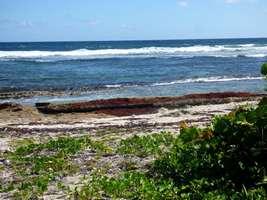 littoral, moule bois baron Grande terre nord, guadeloupe