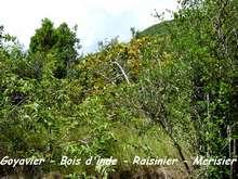 balade terre de bas, arbustes, les saintes, iles guadeloupe, antilles