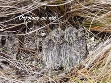 oiseau foret seche, ecocsysteme tropical, guadeloupe, antilles