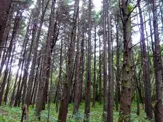 Frézias arbres foret humide ecosystème tropical antilles