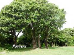 balade st felix, arbres, grande terre, guadeloupe, antilles