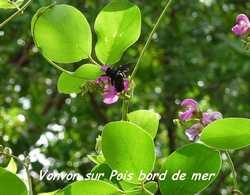 balade st felis, faune, flore, grande terre, guadeloupe, antilles