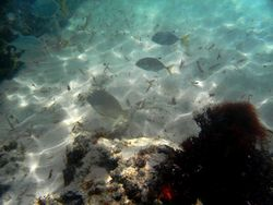 benthos, poissons, récif corallien, guadeloupe, antilles