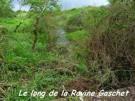 La Ravine Gaschet, Poyen