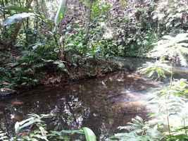 ravine grand Boucan, cascade Bis, Ste Rose, guadeloupe