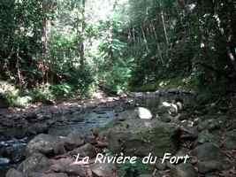 rivière bras de fort, goyave, guadeloupe