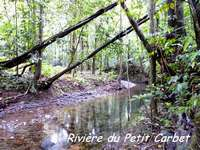 rivière petit carbet, madeleine, basse terre sud, guadeloupe
