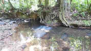 rivière quiock, route mamelles, guadeloupe