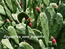 balade plante, jardin, terre de bas, les saintes, iles guadeloupe, antilles
