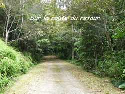 route, balade, dos d`ane, basse terre, guadeloupe, antilles