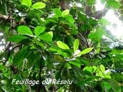 arbre, balade, dos d`ane, basse terre, guadeloupe, antilles