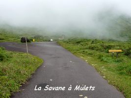 savane  mulets, soufrire , guadeloupe
