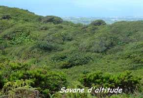 savane d`altitude, soufrire, guadeloupe