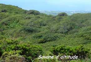 savane d`altitude, soufrière, guadeloupe