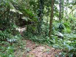 sentier, Bains chauds du Matouba, Papaye