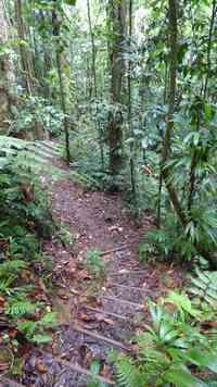 sentier, rivière quiock, route mamelles, guadeloupe