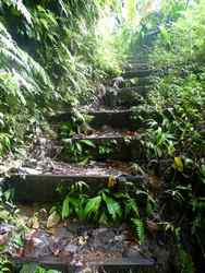 sentier, chutes carbet, basse terre sud, guadeloupe