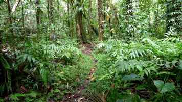 sous bois, rivière quiock, route mamelles, guadeloupe
