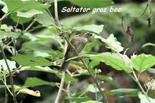 oiseau foret seche, ecosysteme tropical, guadeloupe, antlles