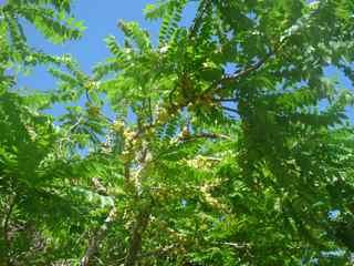 balade morne morel, les saintes, arbre foret seche, guadeloupe