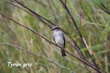 oiseau foret seche, ecosysteme tropical, guadeloupe, antilles